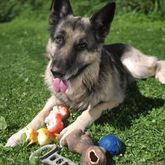 Alsation with selection of old and broken toys