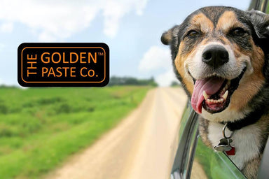 Golden Paste for Pets Dog Supplements Golden Paste Co