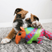 KONG Shieldz Anteater Medium Dog Toys KONG