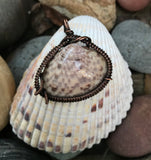 Seashell Wrapped in Copper