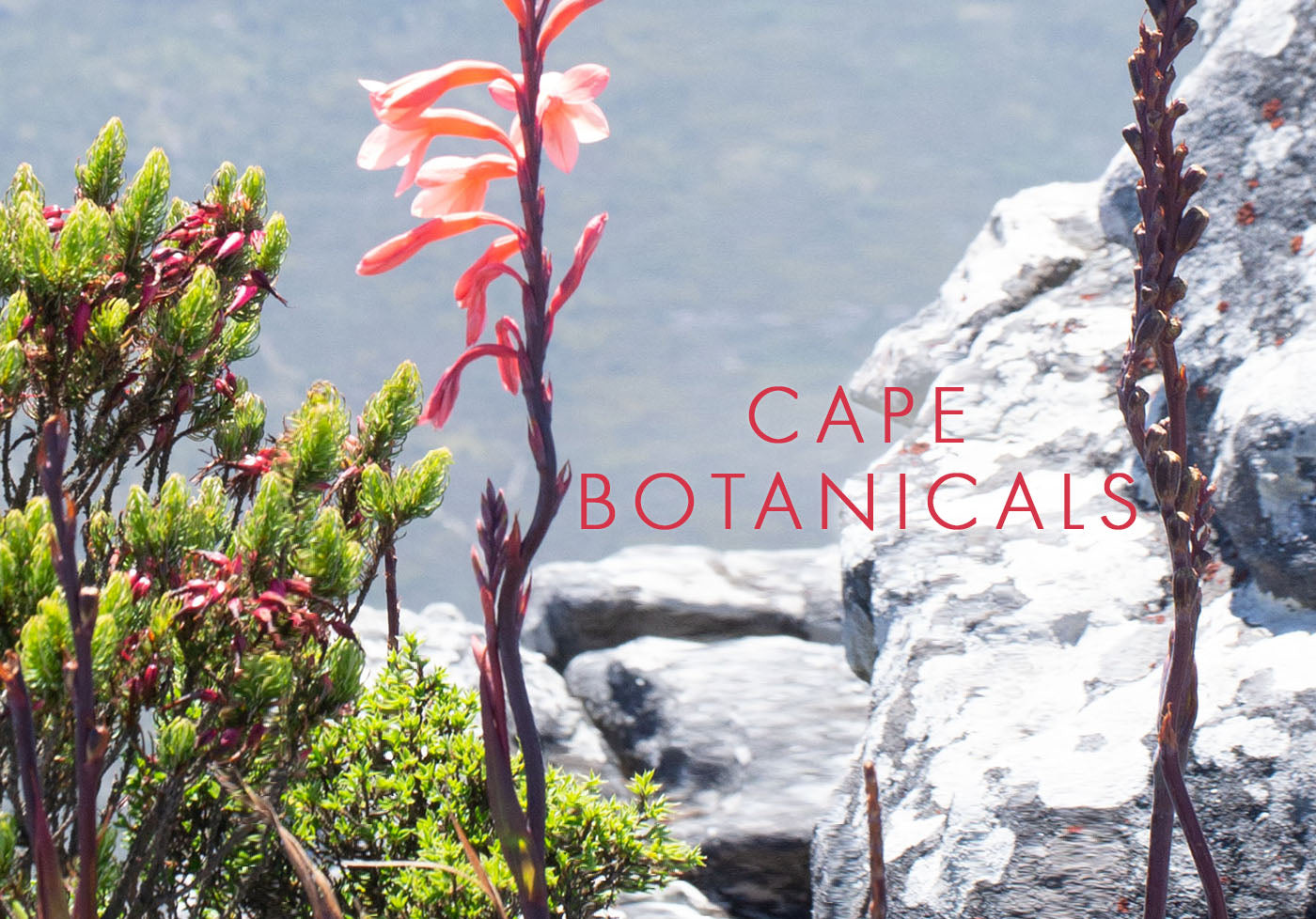 Cape Botanicals