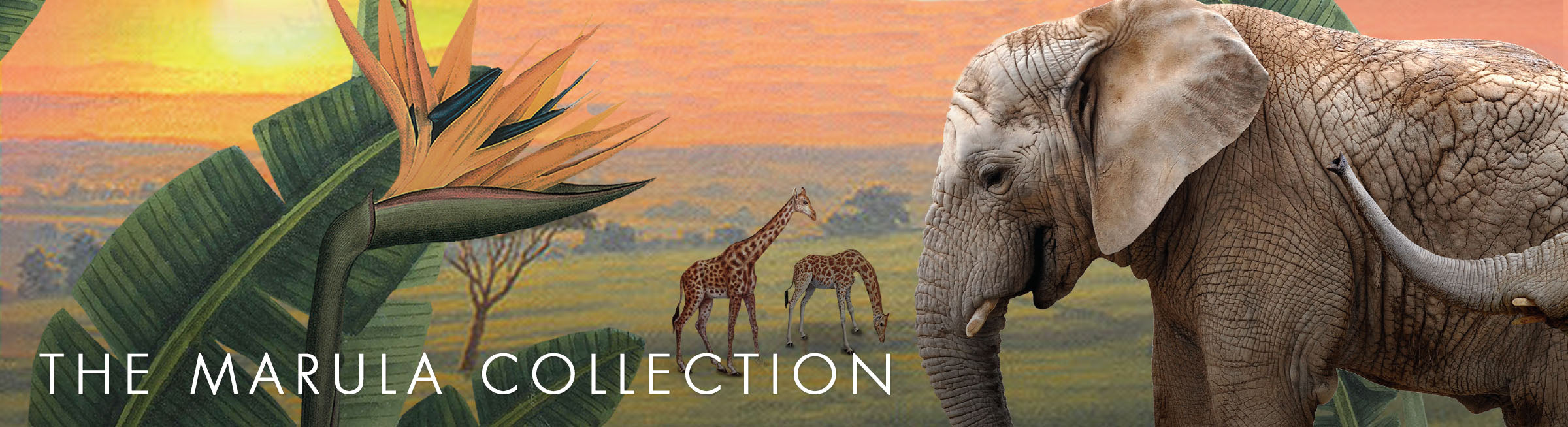 The Marula Collection