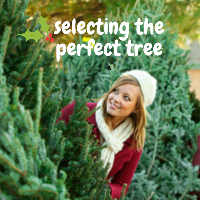 Picking The Perfect Live Christmas Tree