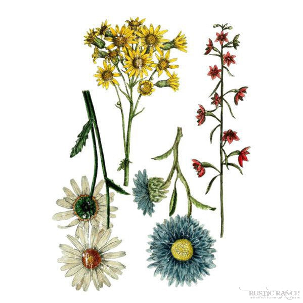 WILD FLOWER BOTANICALS TRANSFER-Rustic Ranch