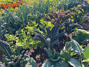 Grow Your Own Health: 1 Year Online Biodynamic Gardening Course