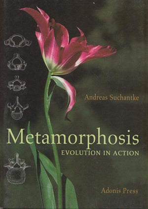 Metamorphosis: Evolution in Action by Andreas Suchantke