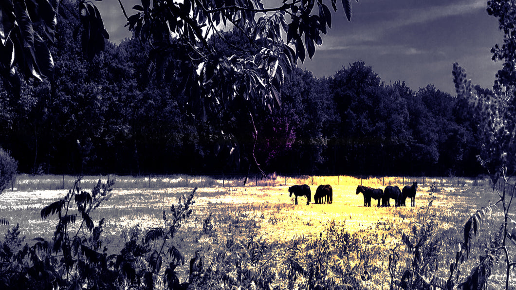 Golden Horses - Metal Print