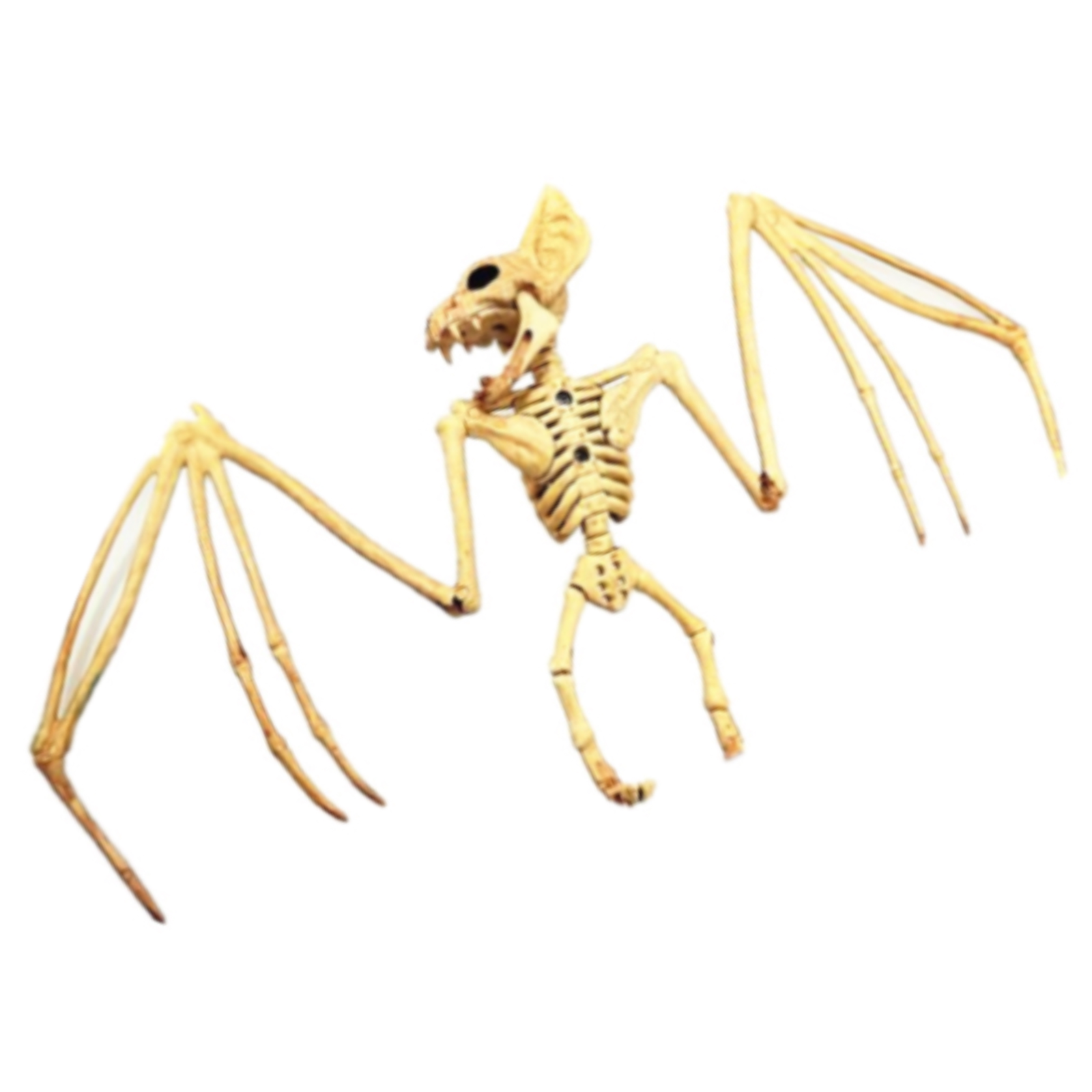 Skeleton Flying Bat  - Buy Online Only