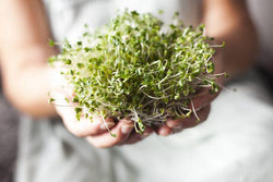Hair Growth 101: Alfalfa Sprouts (Juicing Recipe)