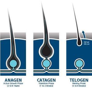 Telogen Effluvium Hair Regrowth