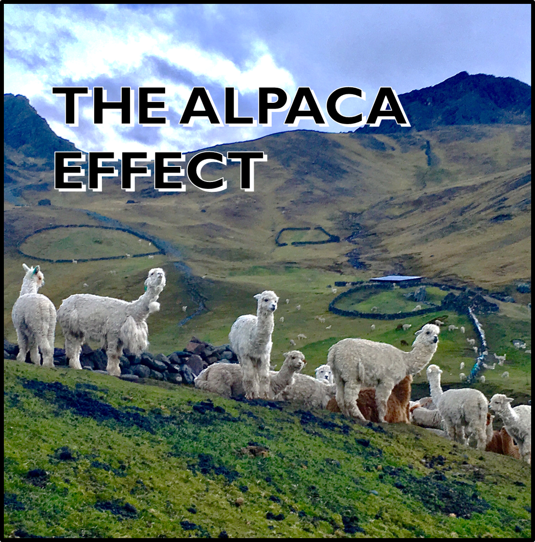The Alpaca Effect