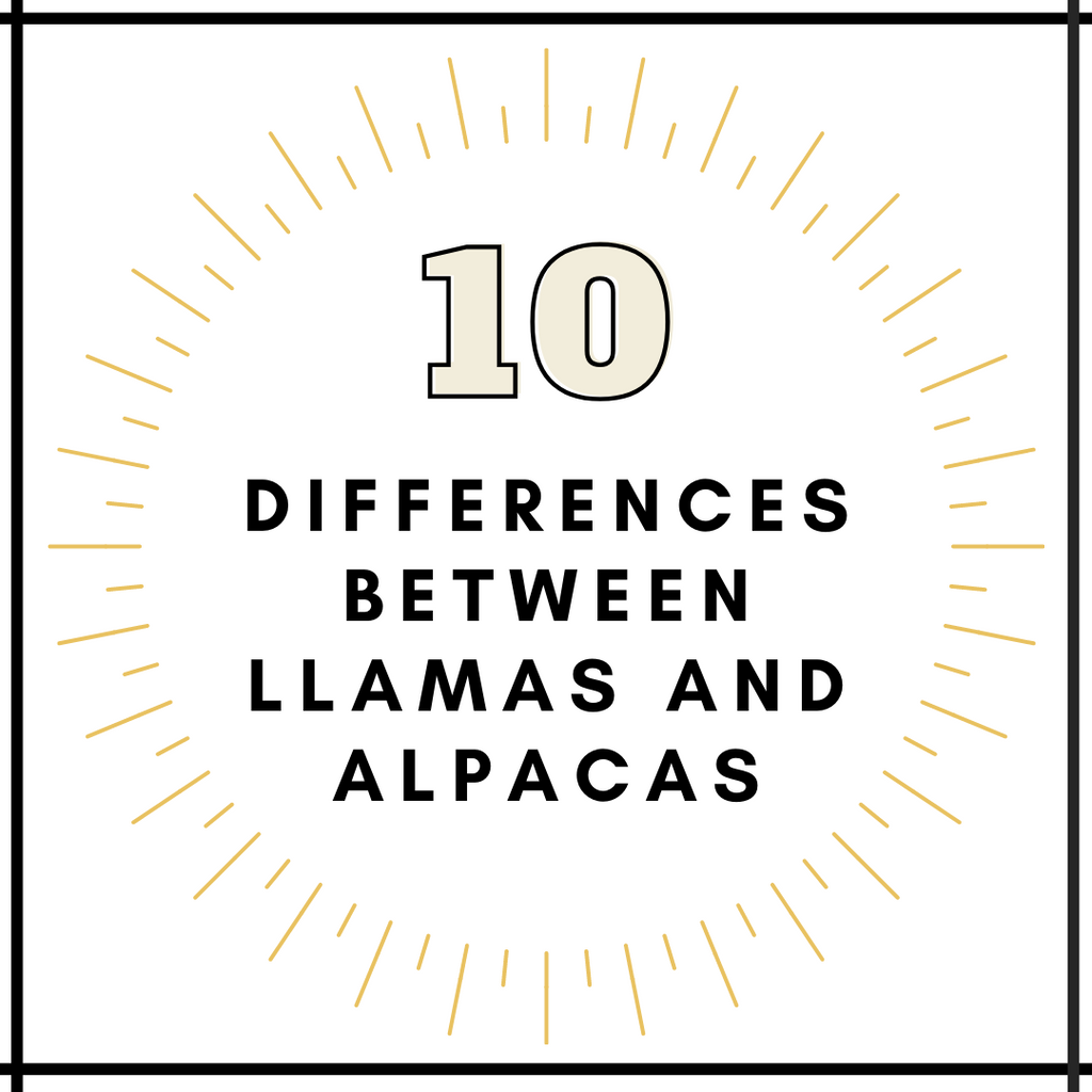 10 Differences Between Llamas and Alpacas