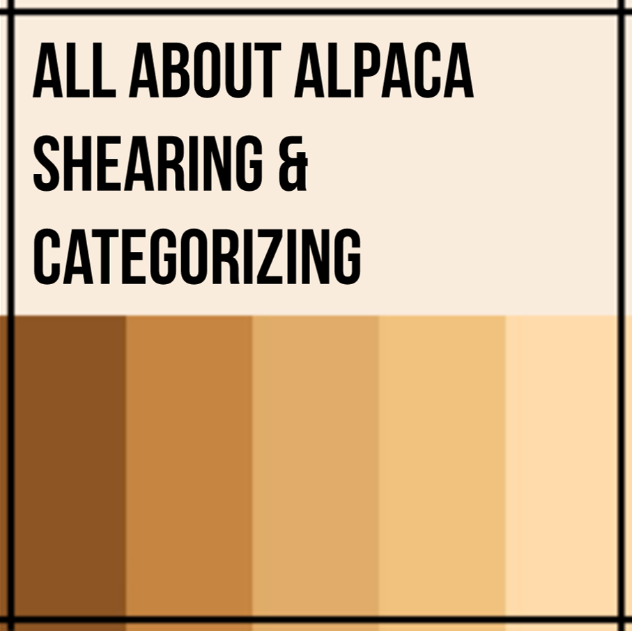 Alpaca Shearing and Categorizing