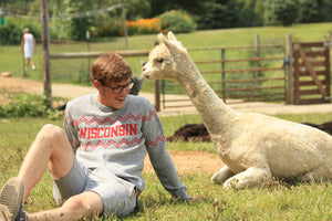 Boy in Wisconsin Crew Neck with alpaca