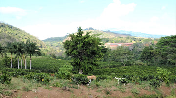 Hacienda Sonora: Ally Coffee Selections