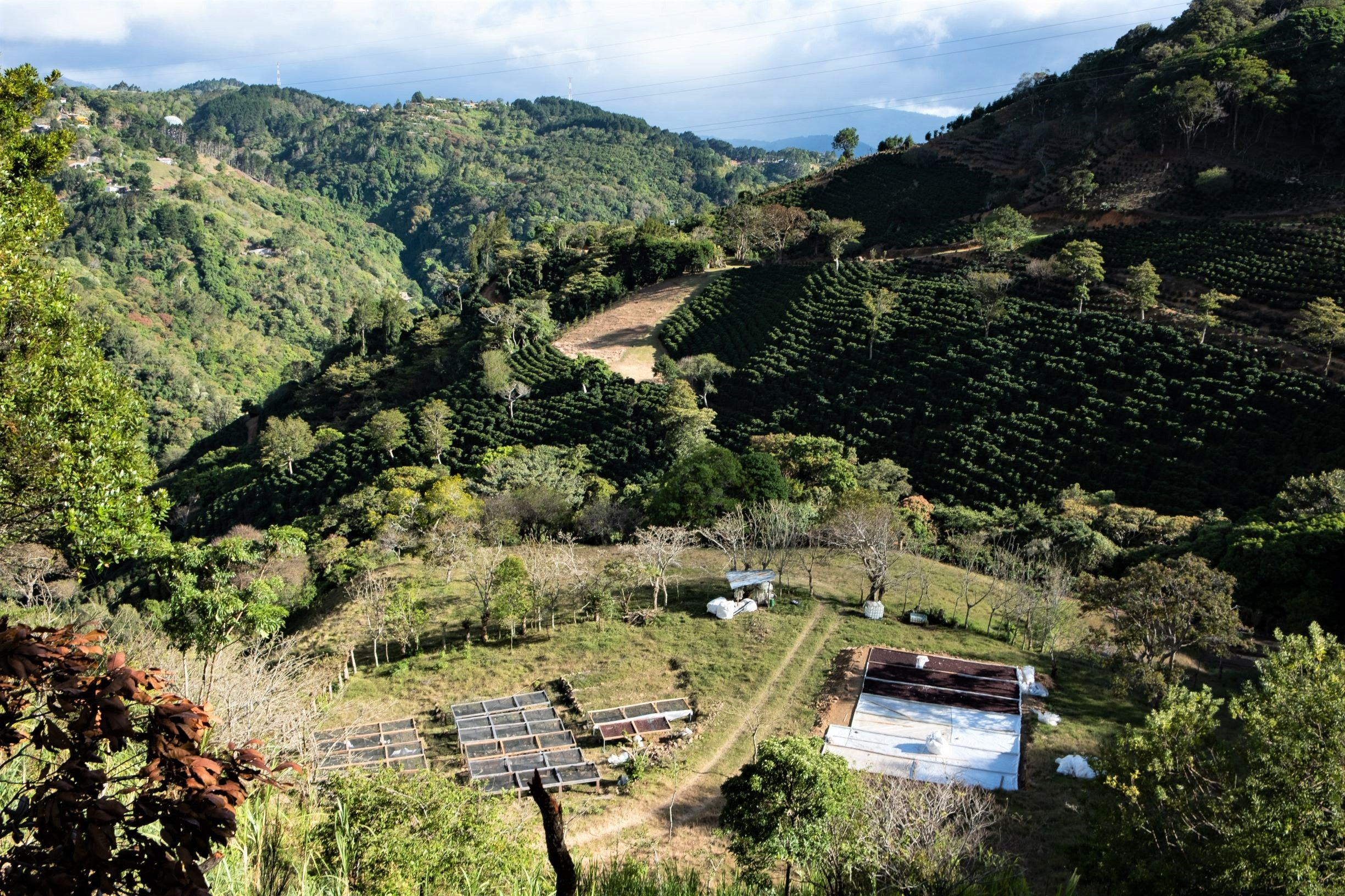 Aerial view of Finca Cedral Alto coffee farm in Costa Rica