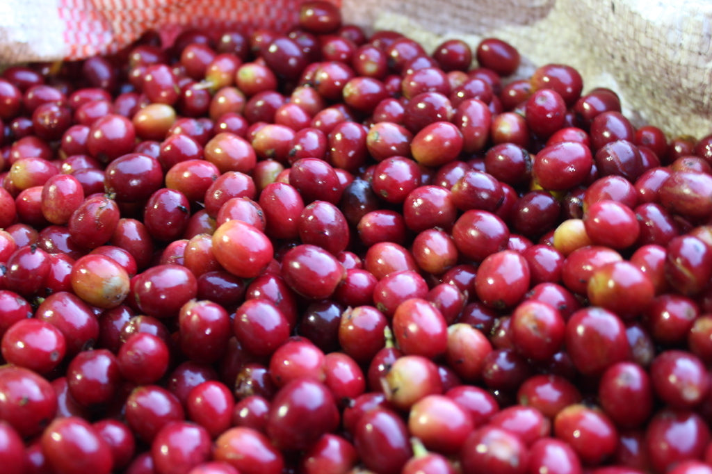 Fresh red cherries in Colombia