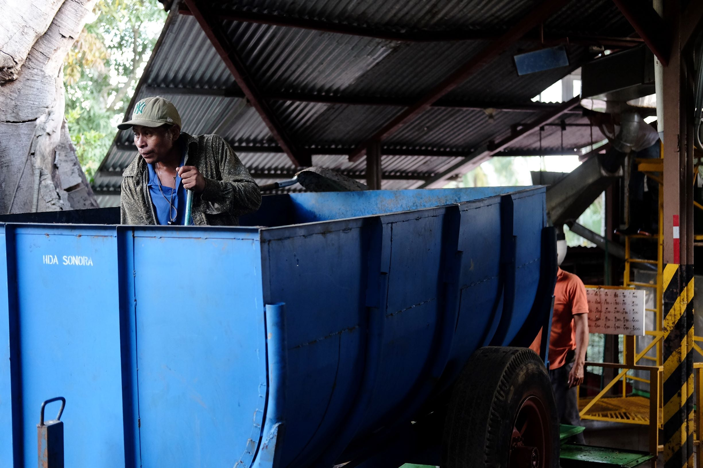 Unloading coffee cherries in the wet mill