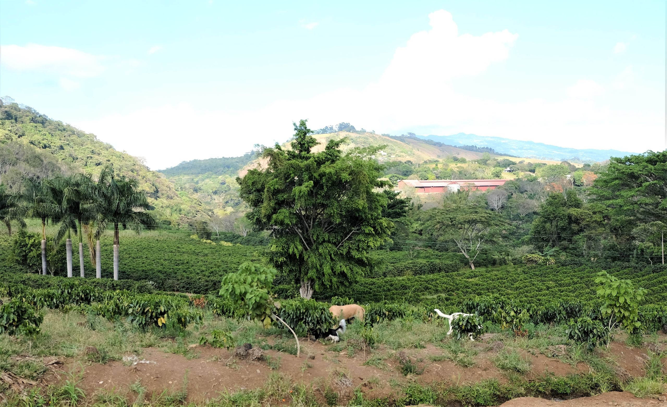 Hacienda Sonora coffee farm in Costa Rica