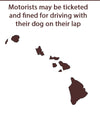 Dog Car Seat News | Hawaii gets serious about dog car safety
