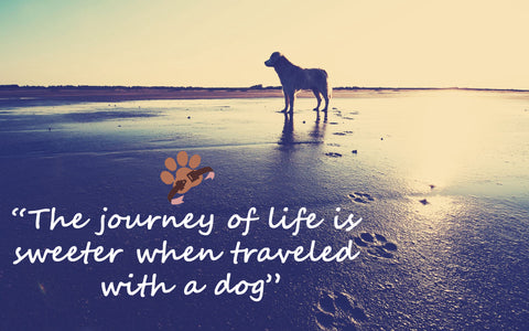 Dog Travel Photo