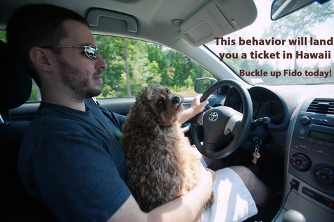 Dog Car Seat Why This Law Exists
