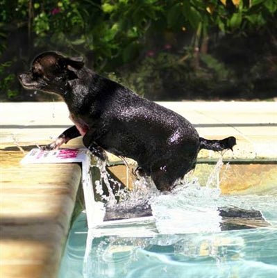Dog Water Safety | Pool Pup Steps