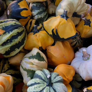 Decorative Gourds (20lb case)