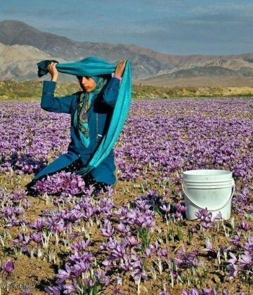 Birjand and the History of Saffron: Part II