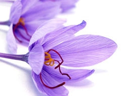 Saffron Nutrition Facts and Medicinal Properties