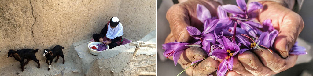Saffron Farmers Hands