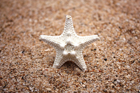 Hoku'ao Starfish Ring