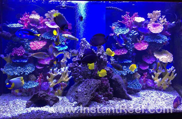 Beautiful saltwater large angel fish tank with artificial corals by Instant Reef