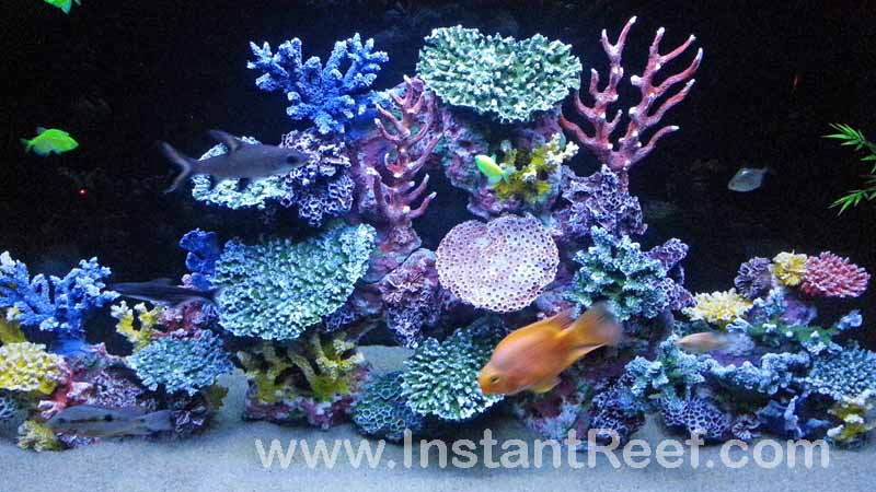 Build your dream freshwater reef tank