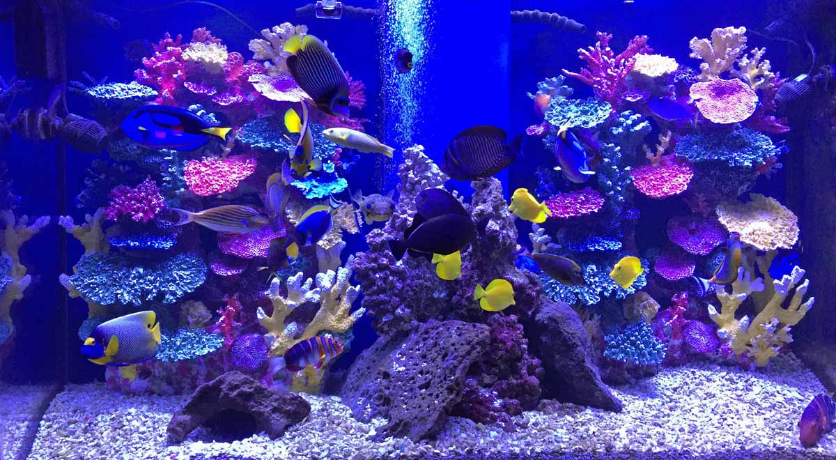 How to Set up & Complete Aquarium Nitrogen Cycle | Instant Reef Decor