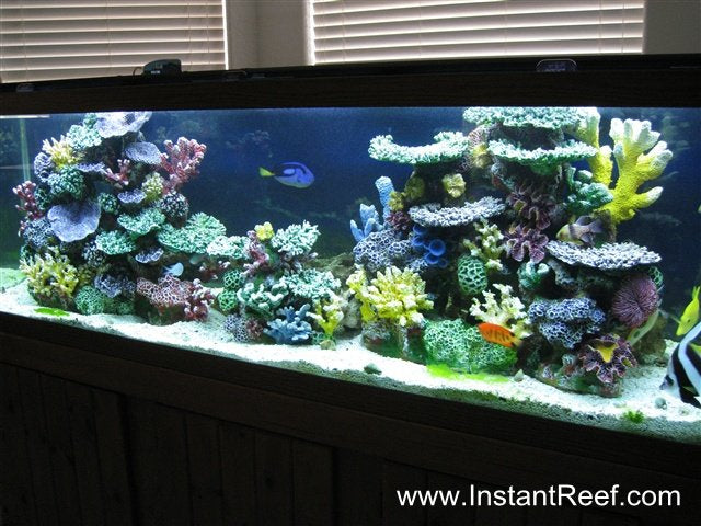 Setup 120 Gallon Saltwater Fish-Only Aquarium Design Upgrade with Artificial Corals