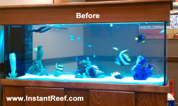 90 Gallon Marine Fish Tank Upgrade with Fake Corals