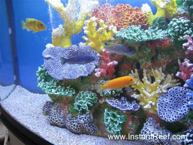 Colorful 46 Gallon African Cichlid Fish Tank with Fake Corals
