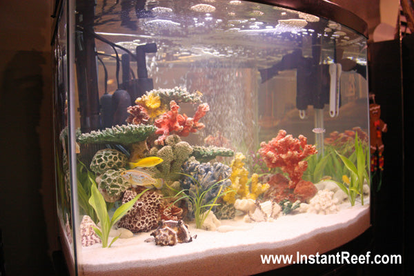 50 Gallon Tropical Fish Tank with African Cichlids
