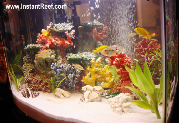50 Gallon Colorful Tropical Fish Tank with African Cichlids