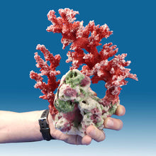 Load image into Gallery viewer, AC014 Artificial Coral