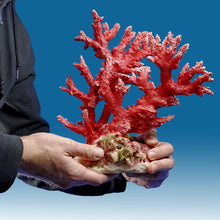 Load image into Gallery viewer, AC017 Artificial Coral