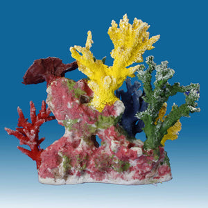 DM055 Small Reef