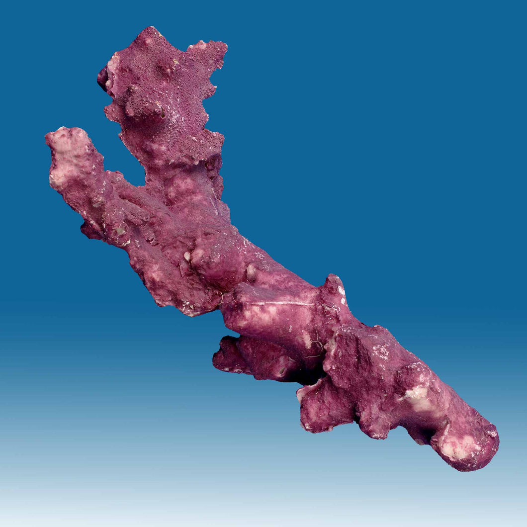 Z003 Artificial Live Rock with Purple Coralline Algae