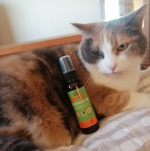 NHV Coco Furcare Helps Cats Coat And Skin