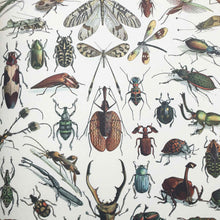 Gift Wrap with Natural History Prints