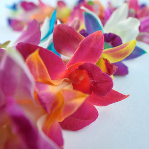 Rainbow Orchid Single Lei
