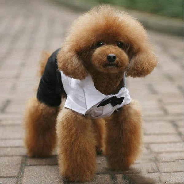Pet Junxion clothing Prince Bow Tie Suit