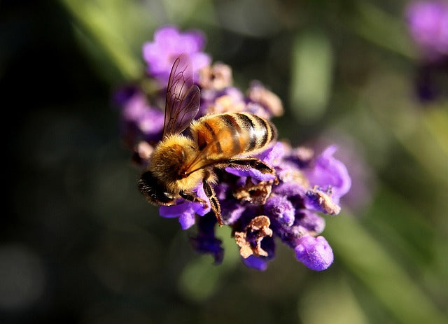 Bee and Tree Tragedies Unfold in Brazil