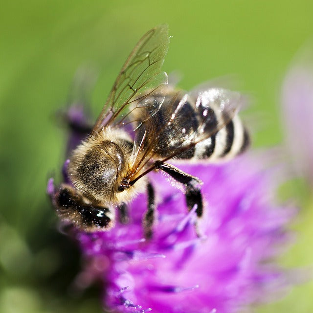 Bee Fully Transparent